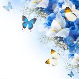 花和蝴蝶,蓝色八仙花属 免版税库存图片