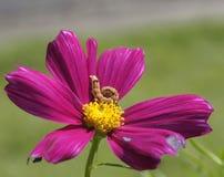 花和蠕虫 免版税库存照片