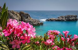 花和这个海岛不可思议的海最终目的地的假期在历史的村庄 库存图片