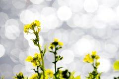 花和闪烁 免版税库存图片