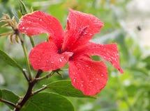 花和雨珠 免版税图库摄影