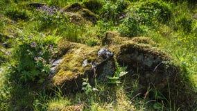 花和青苔在岩石 免版税库存图片