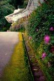 花和青苔在路 免版税库存照片