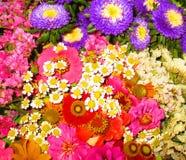 花和颜色 库存照片