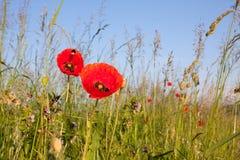 花和风景 免版税图库摄影