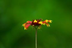 花和绿叶 免版税库存照片