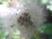 花和绽放 免版税图库摄影