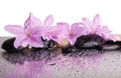 花和黑石头 免版税图库摄影