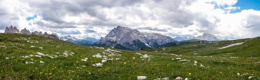 花和绿色平原在惊人的Tre Cime自然公园 库存图片