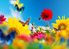 花和蝴蝶晴朗的庭院  免版税库存照片