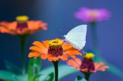 花和蝴蝶 库存照片
