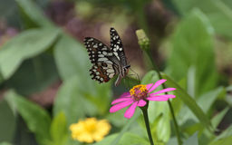 花和蝴蝶 免版税库存图片
