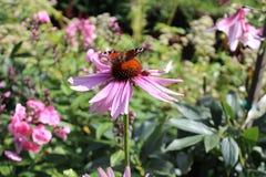 花和蝴蝶 免版税库存照片