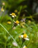 花和bee2 库存照片