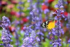 花和butterflie的颜色 库存照片