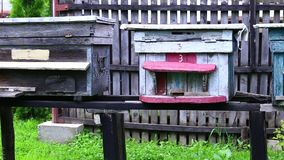 花园和蜂箱 股票录像