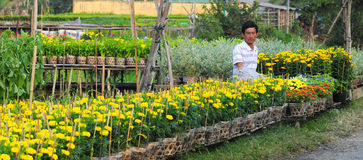 花园在越南 图库摄影