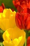 花园春天 免版税库存图片