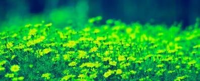 花园环境美化 库存图片