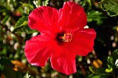花园红色 免版税库存图片