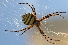 花园蜘蛛万维网 库存照片