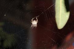 花园蜘蛛被捉住的spunning†‹它的网 免版税库存图片