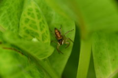 花园蜘蛛 库存照片