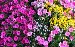 花园 免版税库存照片