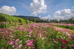 花园 免版税库存图片