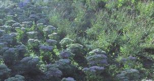 花圃和树与灌木在城市停放 股票视频