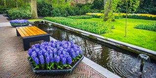 花圃和长凳在五颜六色的春天从事园艺, Keukenhof n 免版税库存照片
