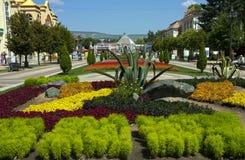 花圃在Kislovodsk 库存照片