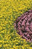 花圃开花桃红色黄色 免版税库存图片
