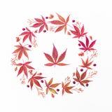 花圈圆的框架由秋天槭树制成在白色背景离开 平的位置,顶视图 苹果秋天对光检查袋装花瓶的构成干燥叶子 免版税库存图片
