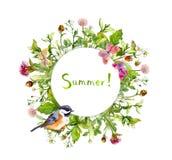花圈框架-夏天开花,鸟,蝴蝶 水彩卡片,圆的边界 库存照片