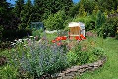 花在一个庭院里在夏天 图库摄影