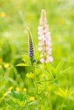 花在一个绿色森林里 图库摄影