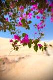 花在一片绿洲开了花在沙漠 库存照片