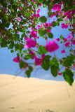 花在一片绿洲开了花在沙漠 图库摄影