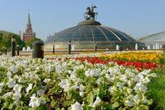 花在亚历山大公园(在白花的焦点) 库存照片