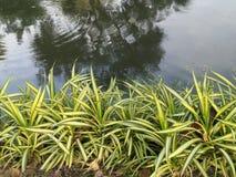 花在公园泰国 库存照片