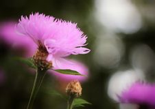 花在公园 图库摄影