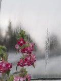 花在冬天 库存图片