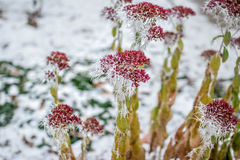 花在冬天 图库摄影