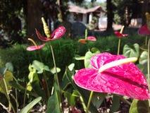 花在后院庭院里 免版税库存照片