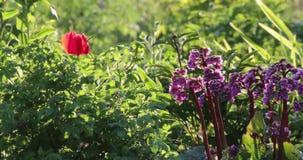 花在夏天在围场
