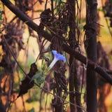 花在密林 库存照片