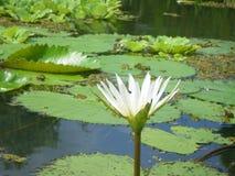 水花在尼加拉瓜湖 免版税图库摄影