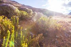 花在山脉 库存图片