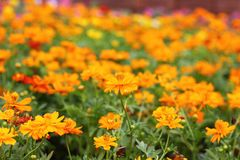 花在庭院可以是到背景 免版税图库摄影